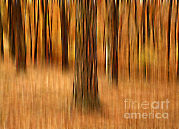 Colors Of Autumn Photograph  - Colors Of Autumn Fine Art Print