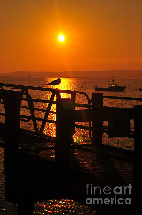 Plymouth Harbor Photograph - Plymouth Harbor Sunrise by Catherine Reusch  Daley
