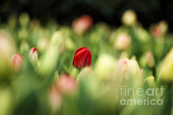 Painterly Photograph - RED by Darren Fisher