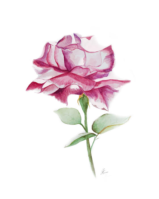 Flower Painting - Rose 2 by Nancy Edwards