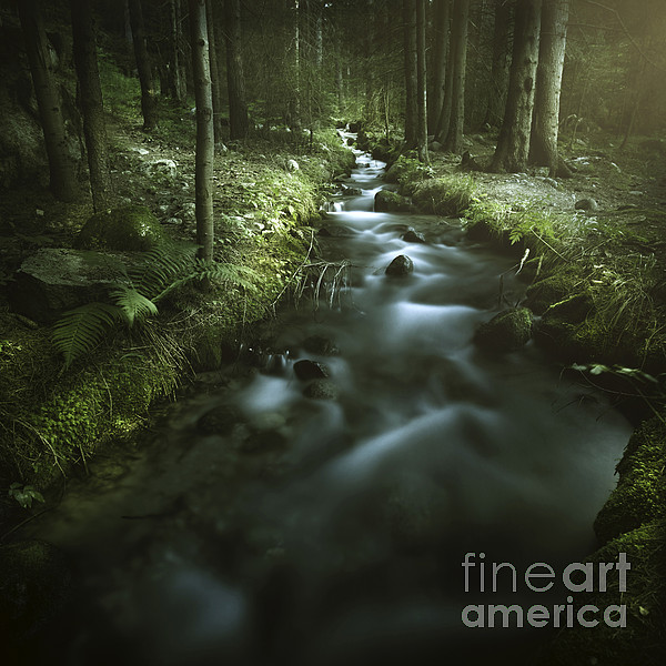 Small Stream In A Forest, Pirin Photograph  - Small Stream In A Forest, Pirin Fine Art Print