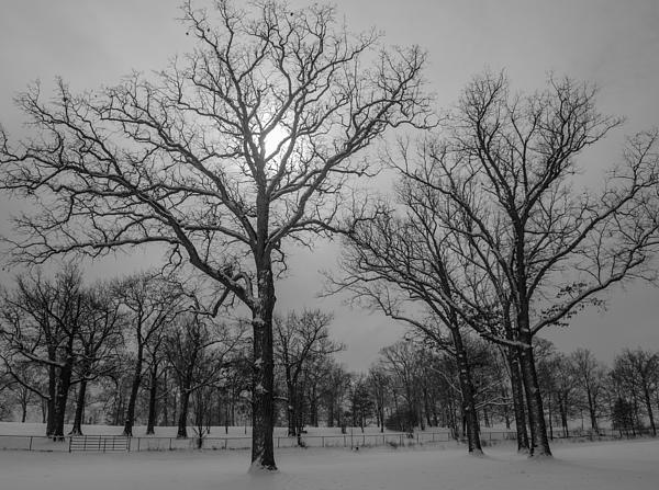 Winter Photograph - Snowy Day In January by Samantha Morris