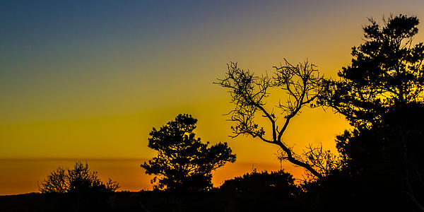 Florida Photograph - Sunset Silhouette by Debra and Dave Vanderlaan