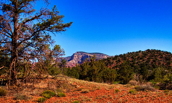 David Patterson - Diamondback Gulch near Sedona Arizona