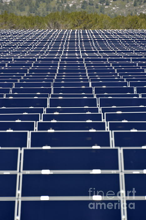 Solar Panels In Farm Photograph  - Solar Panels In Farm Fine Art Print