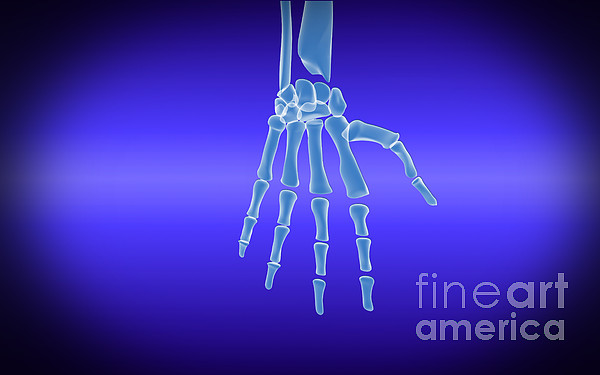 Horizontal Digital Art - X-ray View Of Human Hand by Stocktrek Images