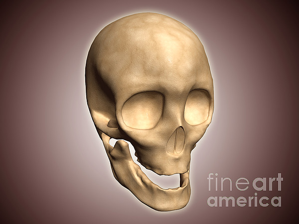 Eye Sockets Digital Art - Conceptual Image Of Human Skull by Stocktrek Images
