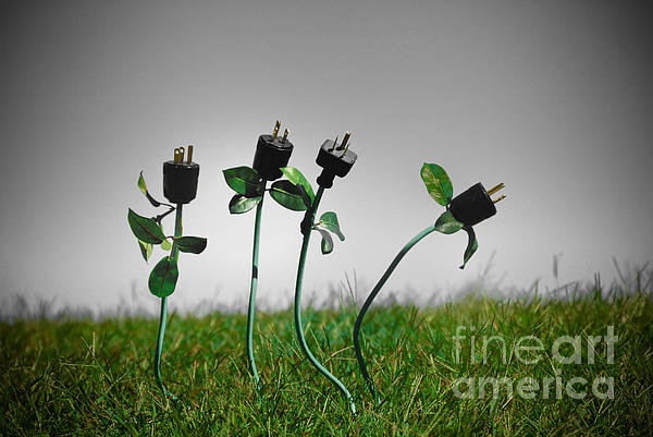 Alternative Energy Photograph - Growing Green Energy by Amy Cicconi