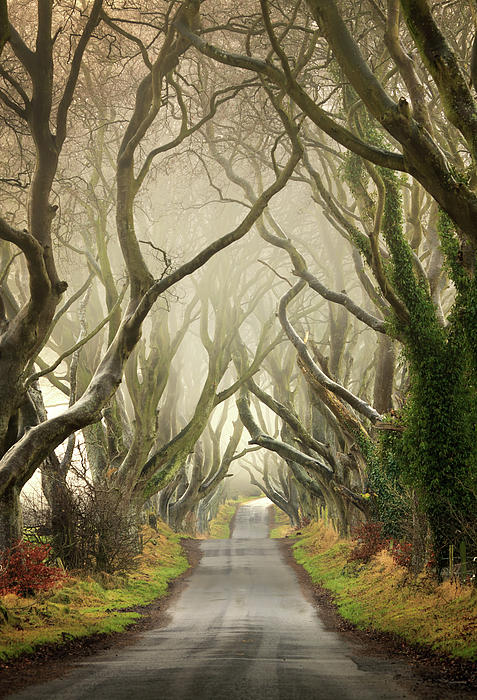 Pawel Klarecki - The Dark Hedges