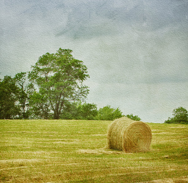 Agricultural Photograph - A Day At The Farm by Kim Hojnacki