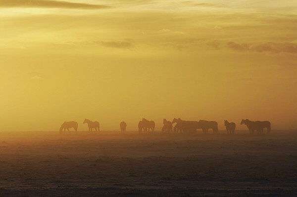 Horse Photograph - A Herd Of Horses In The Morning Fog by Roberta Murray