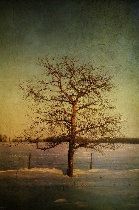 Aspen Photograph - A Pictorialist Photograph Of A Lone by Roberta Murray