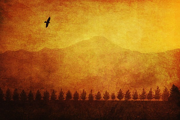 Row Photograph - A Row Of Trees And A Raven Silhouetted by Roberta Murray