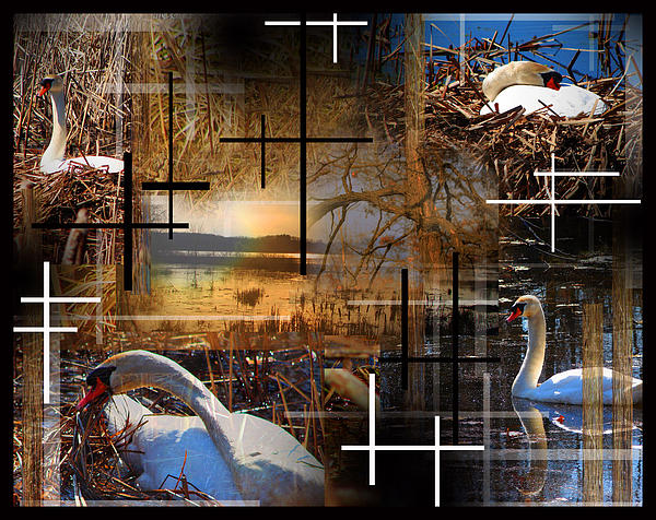 Collage Photograph - A Swans Mysterious World by Andrew Sliwinski