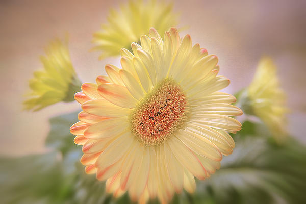 Flowers Canvas Photograph - A Touch Of Sunshine by Fiona Messenger