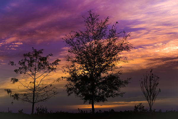 Nature Photograph - A Whisper In Nature by Melanie Moraga