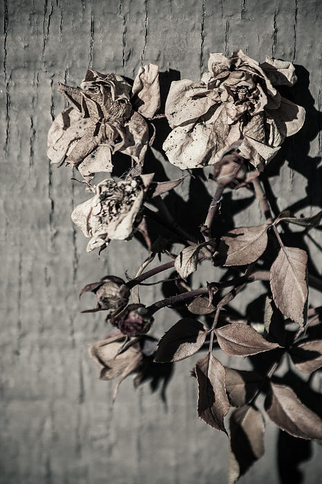 Background Pattern Photograph - Almost Gone by Lauri Novak