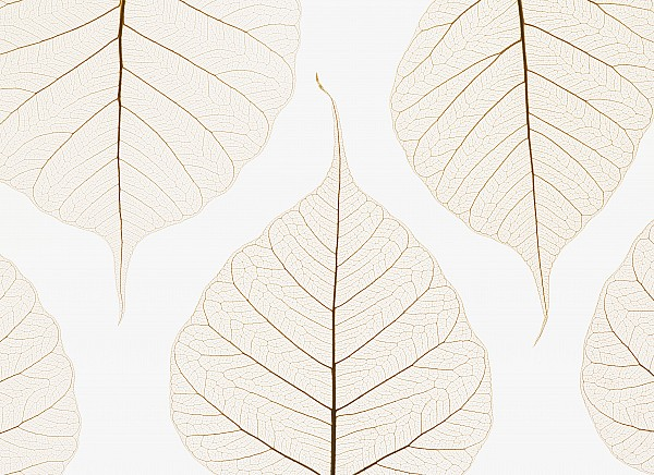 Arranged Photograph - Arranged Leaves by Kelly Redinger