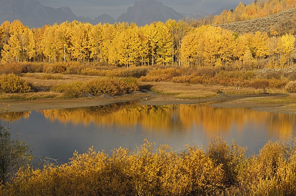 Populus Tremuloides Photograph - Autumn Foliage Surrounds A Pool In The by David Ponton