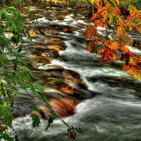 Maple Photograph - Autumn On The River by Randy Hall