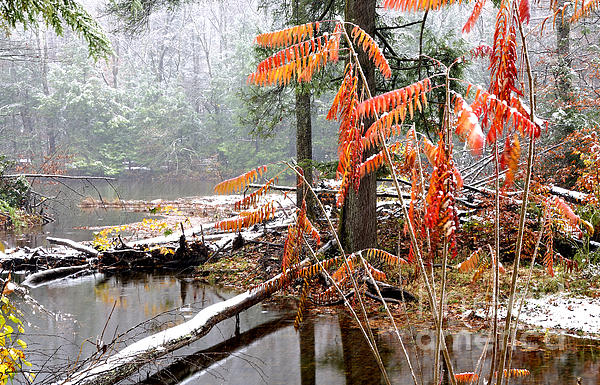Autumn Snow Cranberry River Photograph  - Autumn Snow Cranberry River Fine Art Print