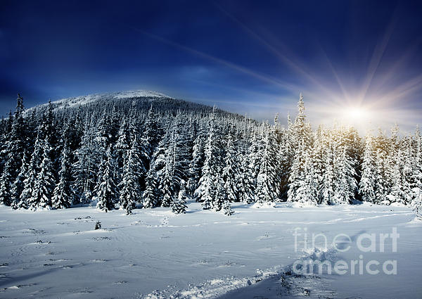Beautiful  Photograph - Beautiful Winter Landscape With Snow Covered Trees by Boon Mee