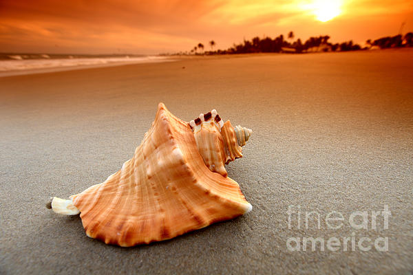 Beauty Photograph - Beauty Shell by Boon Mee