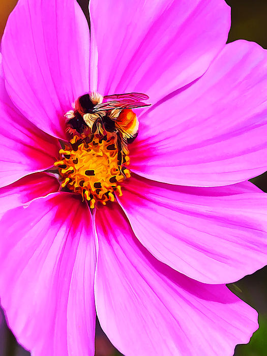 Bee On Pink Photograph  - Bee On Pink Fine Art Print