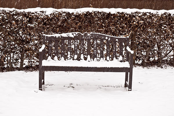 Background Photograph - Bench In The Snow by Tom Gowanlock