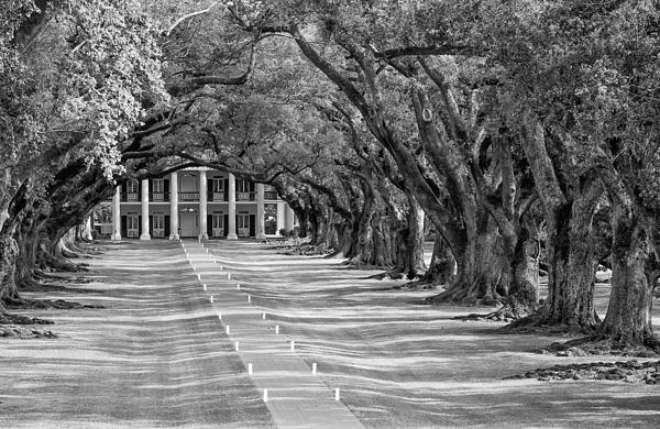 Oak Alley Plantation Photograph - Beneath Live Oaks Bw by Steve Harrington