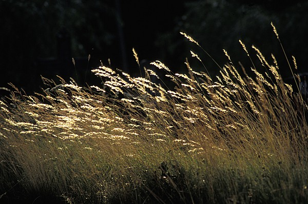 Photographic Photograph - Blades Of Grass In The Sunlight by Jim Holmes