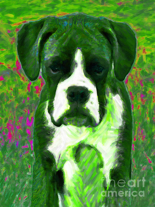 Animal Photograph - Boxer 20130126v3 by Wingsdomain Art and Photography