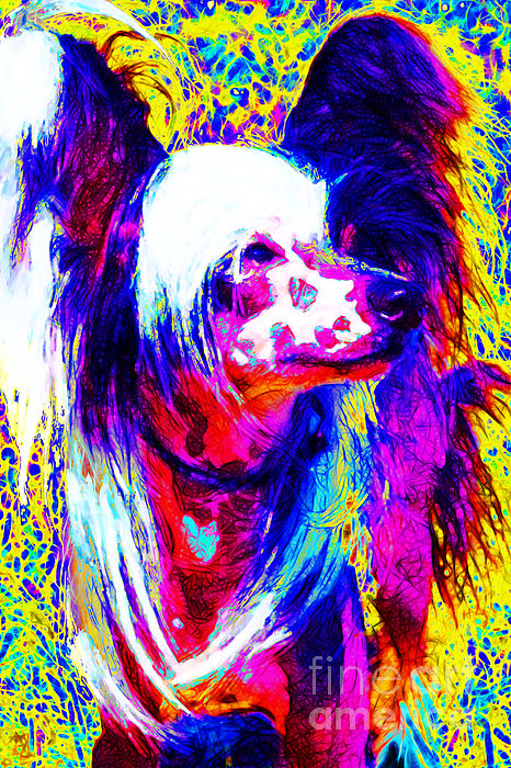 Animal Photograph - Chinese Crested Dog 20130125v1 by Wingsdomain Art and Photography
