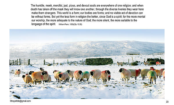 A Digital Artwork Of Mixed Sheep (ownershp Colours) Seating Together In The Snow Photograph - Colours by Mike Hoyle