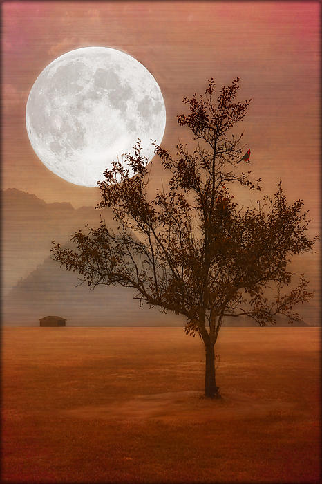 Landscape Photograph - Copper Tree by Tom York Images