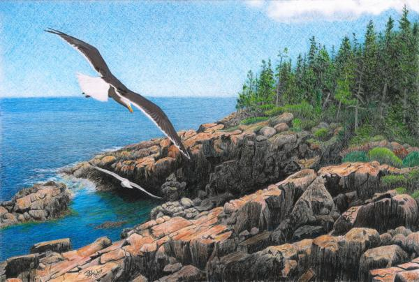 Crusing Otter Point Drawing  - Crusing Otter Point Fine Art Print