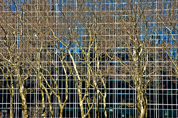 Trees Photograph - Culture And Nature by Joanna Madloch