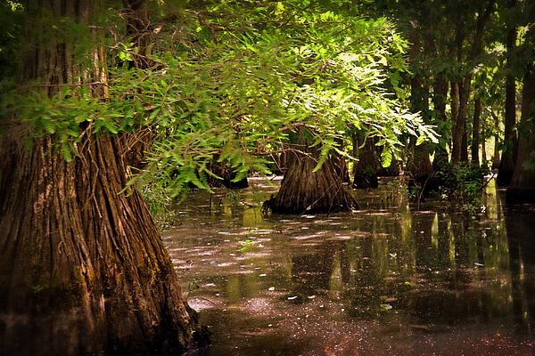 Swamp Photograph - Cypress Swamp by Marty Koch
