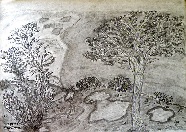 Cypresses In Cyprus Drawing