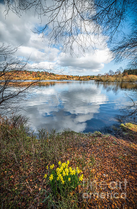 Betws Y Coed Photograph - Daffodil Lake by Adrian Evans
