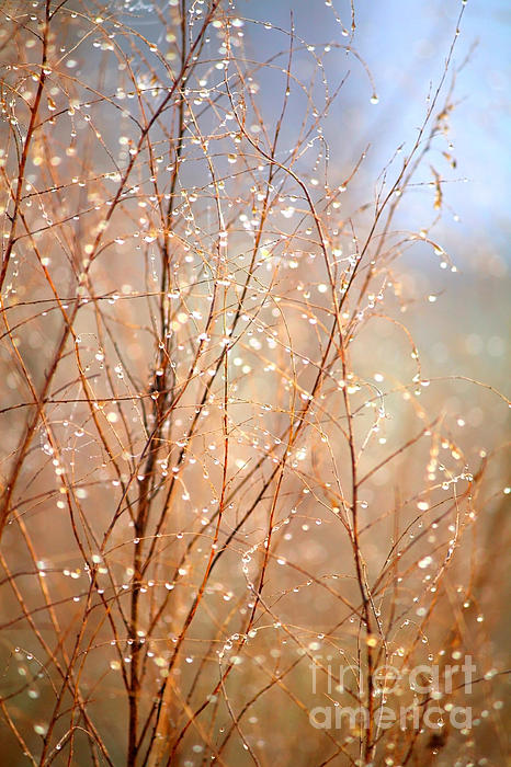 Dewdrop Morning Photograph  - Dewdrop Morning Fine Art Print
