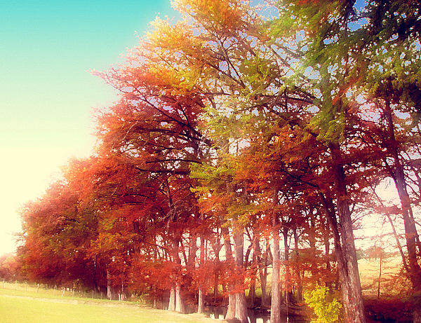 Dream Trees Photograph  - Dream Trees Fine Art Print