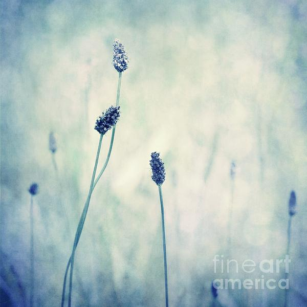 Blue Photograph - Endearing by Priska Wettstein