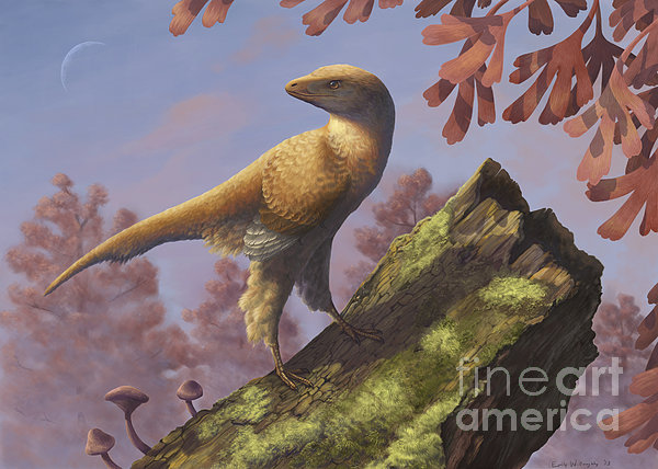 Eosinopteryx Brevipenna Digital Art - Eosinopteryx Brevipenna Perched by Emily Willoughby
