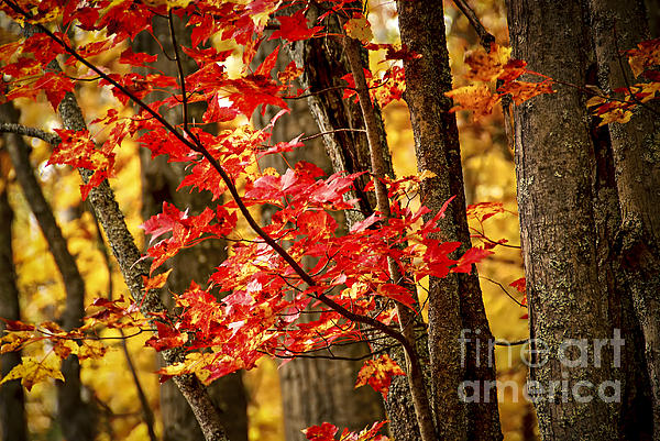 Fall Forest Detail Photograph  - Fall Forest Detail Fine Art Print