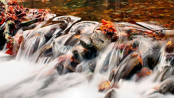 Carol R Montoya - Fall waters