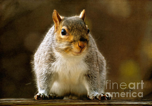 Squirrel Photograph - Fat n Sassy Smile by Lois Bryan