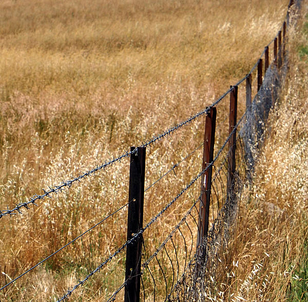 Fence Photograph - Fenced Off by Kaleidoscopik Photography