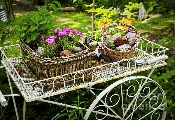 Garden Photograph - Flower Cart In Garden by Elena Elisseeva