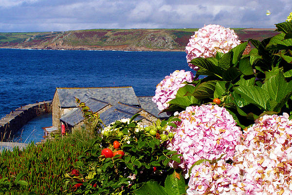 Hydrangea Photograph - Flowers With A Sea View by Terri Waters
